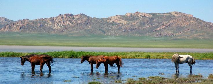 Gengis Khan passe l'été 1224 dans la région de l'Irtych puis rentre en Mongolie au printemps 1225.