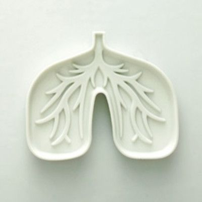Which lung is bigger? right one! The right lung is larger than left lung, due to the heart being located slightly to the left (even though it is shorter due to upward compression by liver). The left lung is made up of 2 lobes while right is made up of 3 lobes.