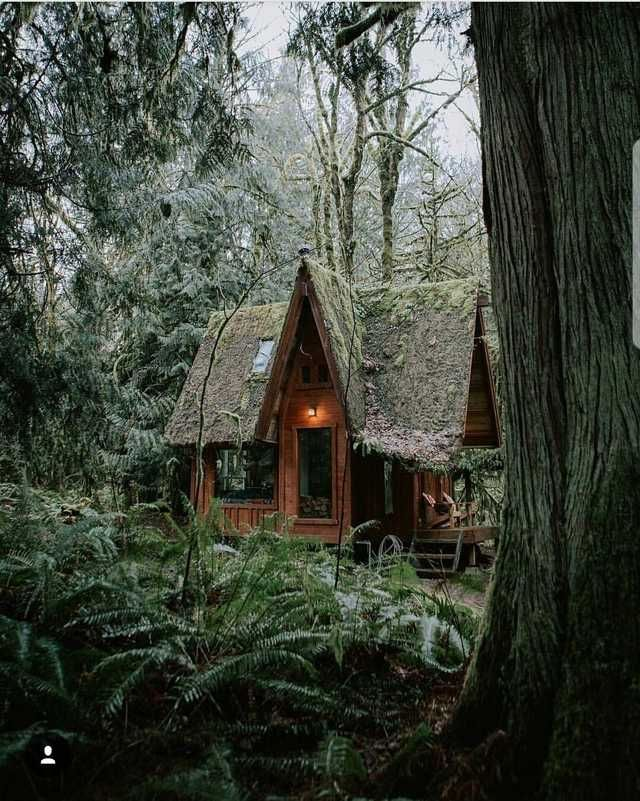 Imgur Forest Cottage Cottage In The Woods House In The Woods