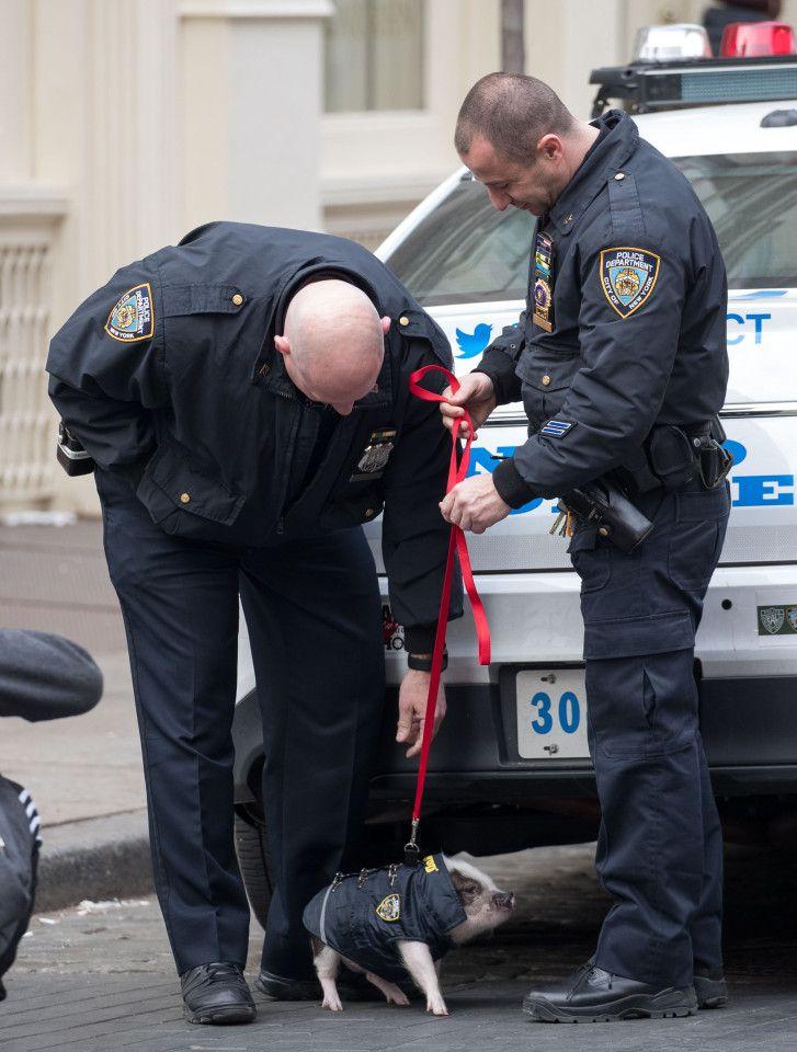 Porky the Police Pig via Classy Bro