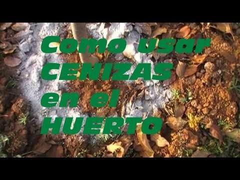 Cómo usar las cenizas en el huerto o jardín   Plantas