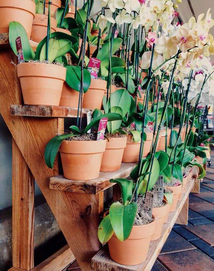 how to keep an orchid alive uk