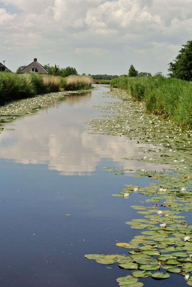 Look how beautiful those water lilies are on both sides of the water. #Vinkeveen