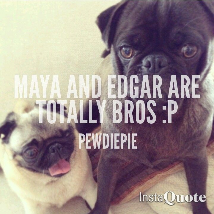 21 best images about Maya and edgar board on Pinterest ...