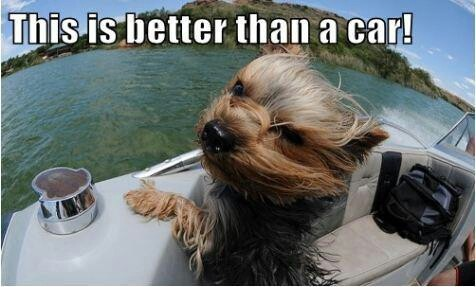 Fishing Quotes And Jokes By Wetaworm Yorkie Yorkie Dogs