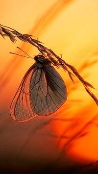 Motyl trzymający się pochyłej trawy