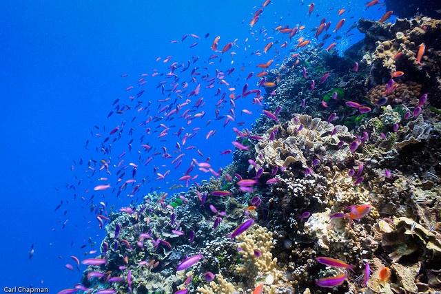 Agincourt Reef, Great Barrier Reef, Australia.