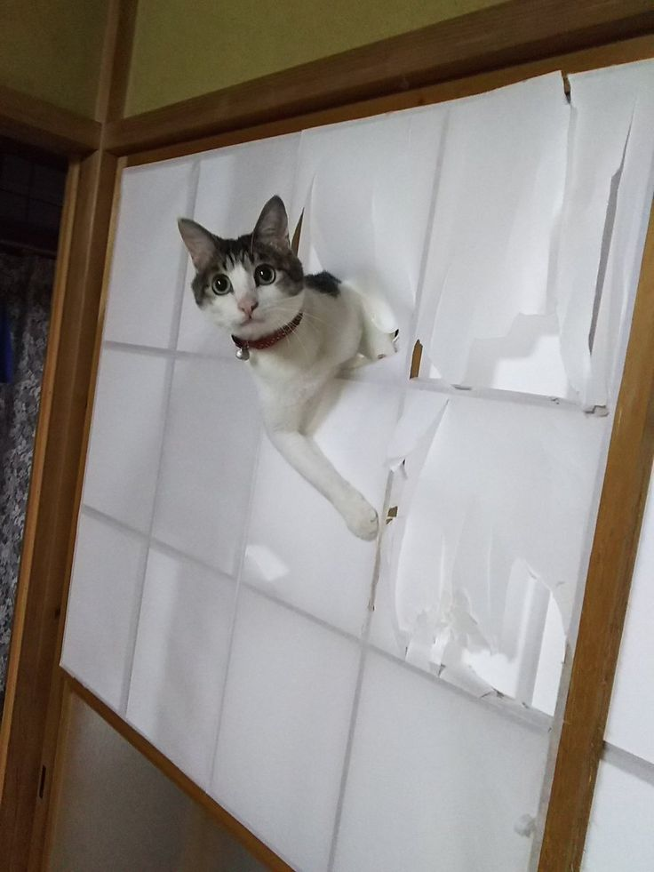 "Kitty-Cat:  ""What do you mean this was an expensive Japanese screen?  Well, no-one told me!""    ♥"