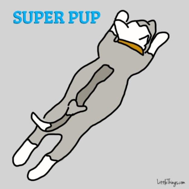 If your dog sleeps like this, it means something incredible. Everyone should know that.
