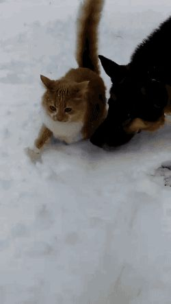 taste-the-snow