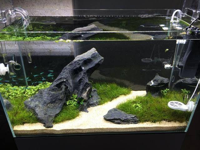 Acvariu ADA Cube Garden 60-P - 60x30x36cm cu stand