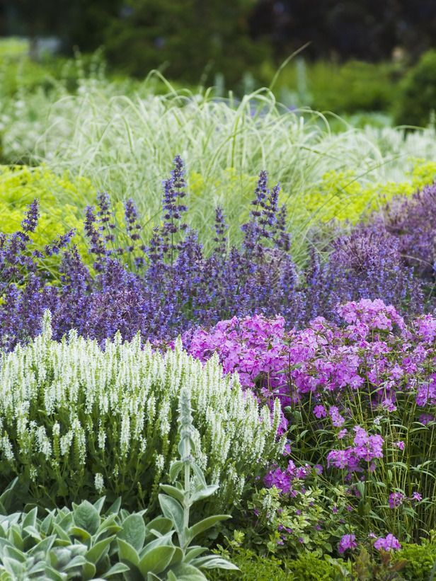 Lamb's ears, Salvias, garden phlox, nepetas, variegated ornamental grasses