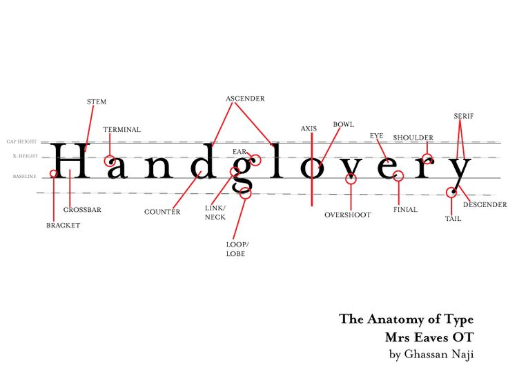 The 25 Best Typography Terms Ideas On Pinterest Anatomy