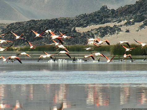 Antofagasta de la Sierra: Lagunas de la puna