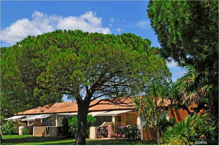 La résidence Le Mas Blanc, située à Pérols avec d'agréables jardins méditerrannéens.