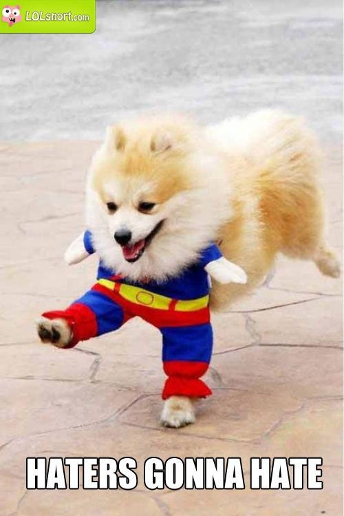 ha!: Puppies, Funny Dogs, Halloween Costumes, Dogs Costumes, Cat Costumes, Funnydog, Pomeranians, Pet Costumes, Animal