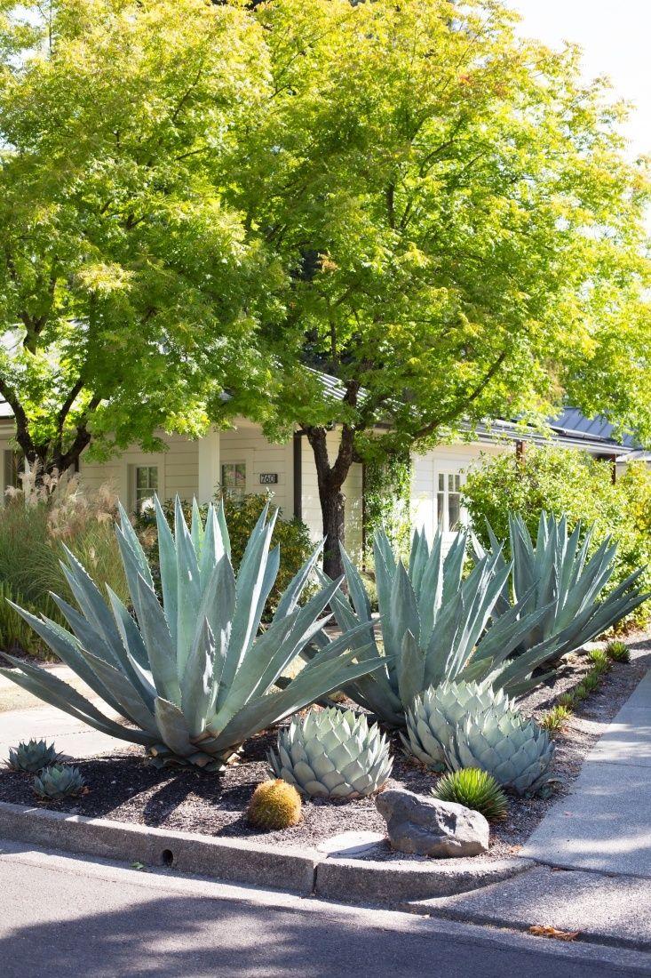 driveway garden, cactus succulents in gravel, by Mimi Giboin