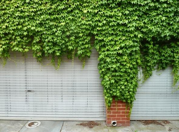 Photo of green ivy taking over inner city carport.