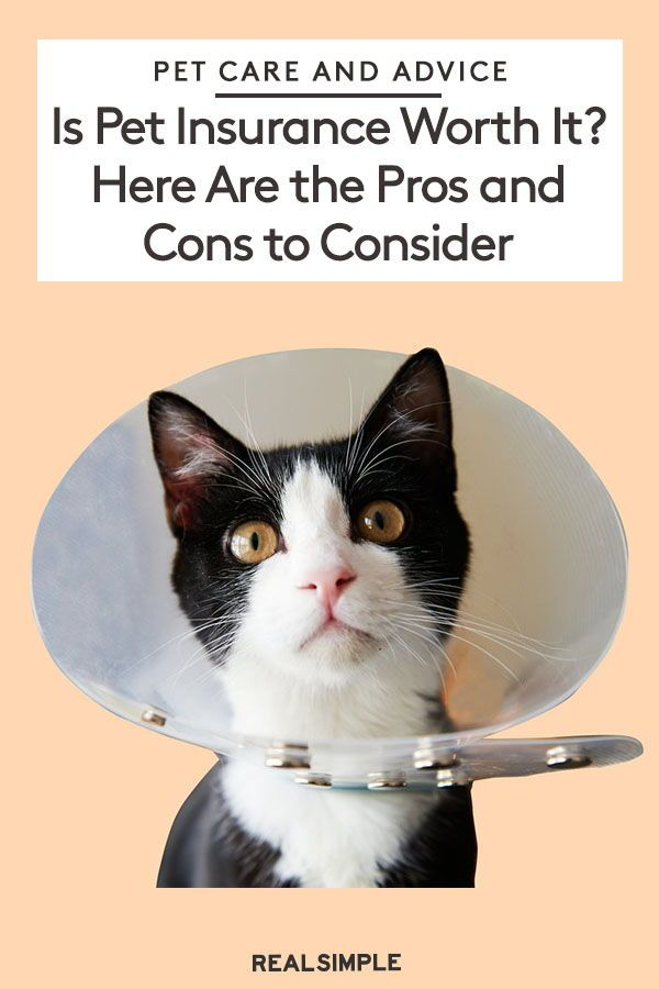 Is Pet Insurance Worth It Here Are The Pros And Cons To Consider Pet Insurance Pets Pet Care