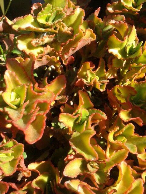 Pretty succulent ♡