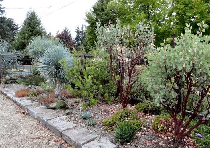 Les 47 meilleures images du tableau jardin mediterraneen for Conseil sur les plantes