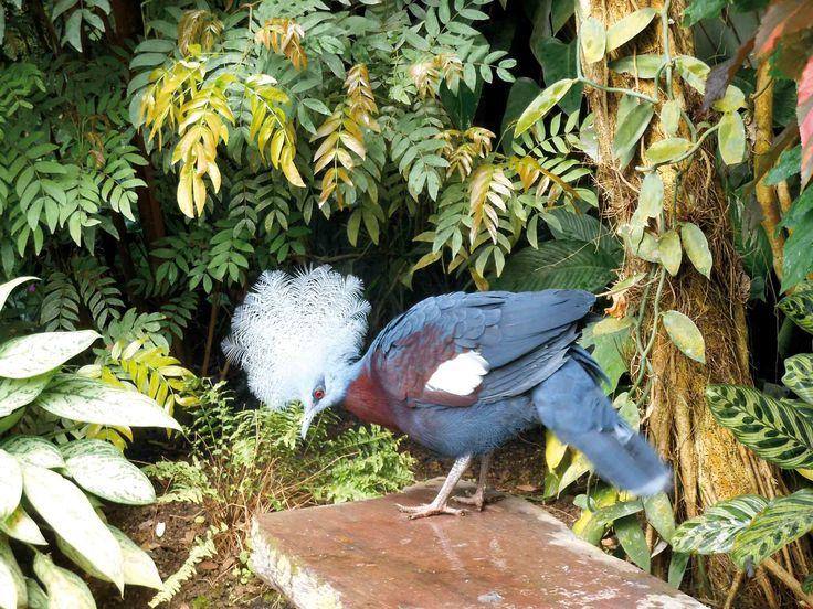 Naturospace Honfleur, Jardin, zoo et serre à papillons tropicaux vivants à Honfleur Normandie. Oiseaux exotiques rares en liberté dans ce zoo du Calvados.