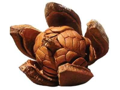 Biji Mahoni - Berikut ini ada beberapa khasiat maupun manfaat biji mahoni untuk pengobatan diabetes atau sebagai solusi program diet ketat maupun perawatan jerawat.