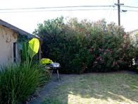 This backyard has pretty plantings, but needs a solution for its unkempt lawn.