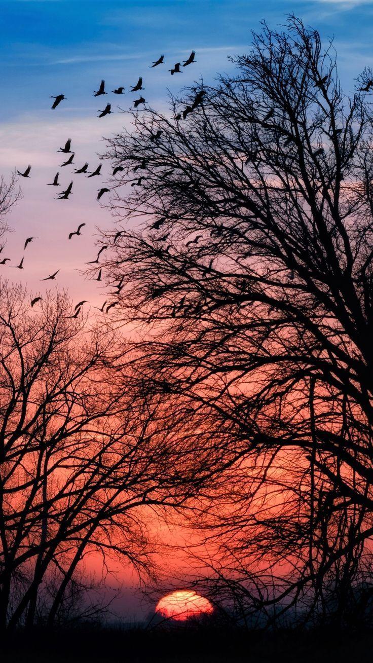 Earth / Sunset (1080x1920) Mobile Wallpaper -  -