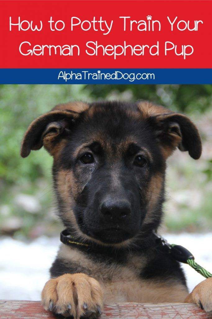 10 Tips For House Training A German Shepherd Puppy German