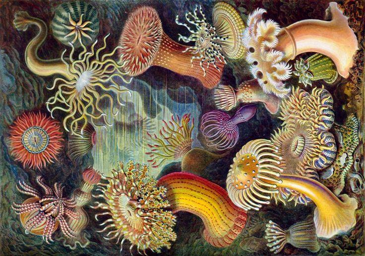 polipos marinos - Buscar con Google