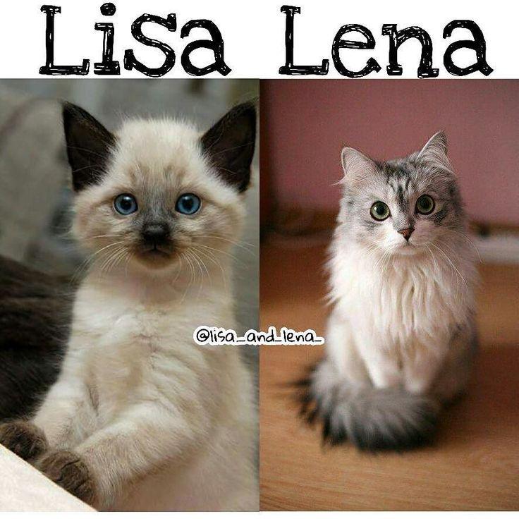 Lisa #cats #lisaorlena
