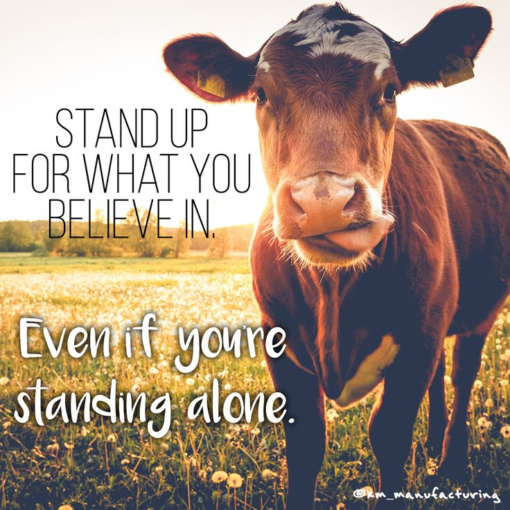 Always stand up for what you believe in. #inspiration #farmlife #agriculture #quote #cow #quoteoftheday
