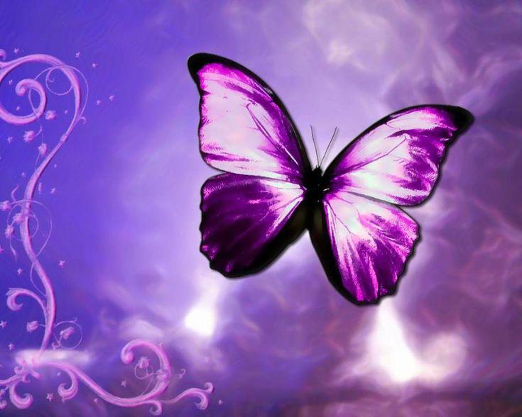 Purple butterfly wallpaper - photo#20