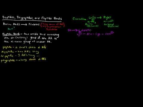 Amino Acids (Part 5 of 5) - Peptides, Polypeptides, and Peptide Bonds - YouTube