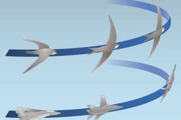 Secret of Bird Flight Revealed  - learn the science behind a bird flying and how it then lands