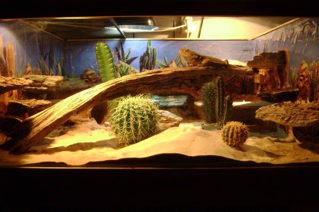 Bearded Dragon Habitat | name bearded dragon habitat type terrarium detail home made 4foot x ...
