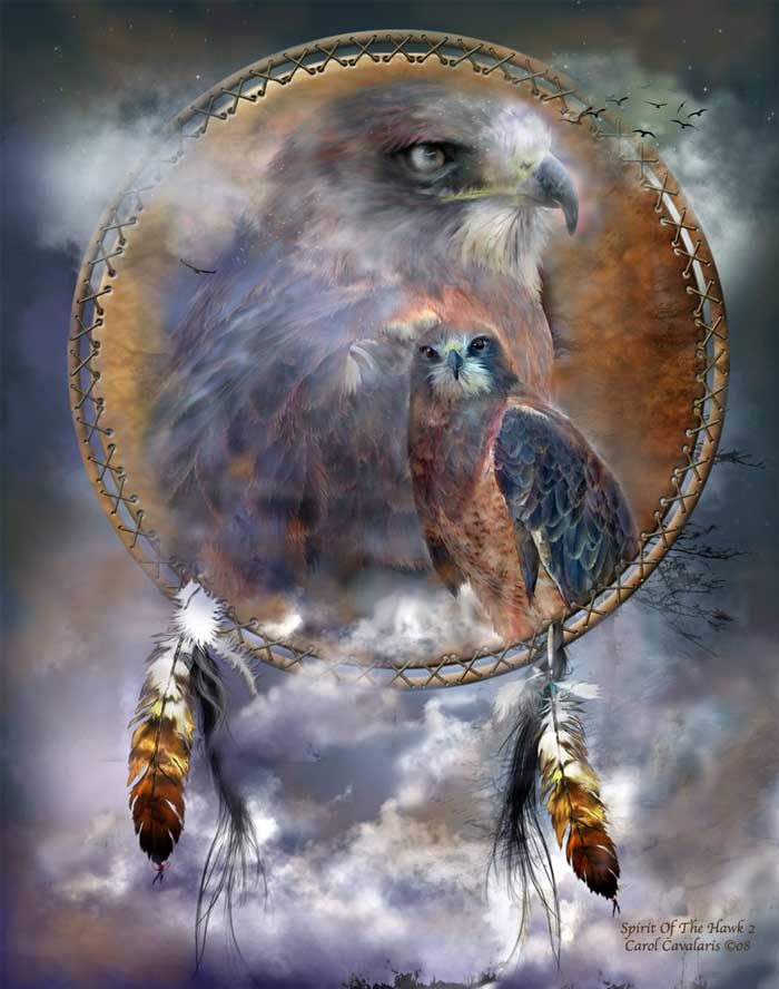 Spirit Of The Hawk, my animal guide, the messenger...