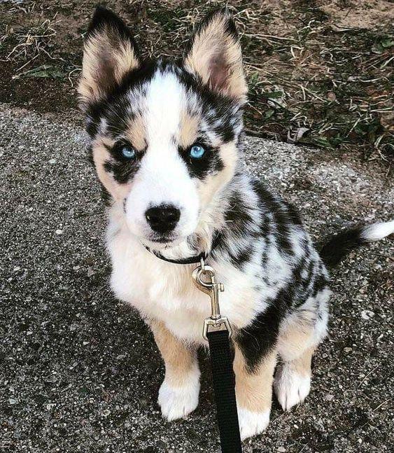 prettiest eyes on this gorgeous doggo #dogs #pups #puppy #puppies #doggo #puppydog #pretty #eyes