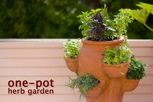 my fire-escape herb garden in a strawberry planter; i see a weekend project in my future.