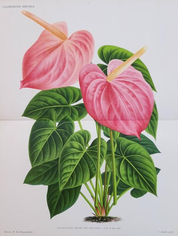 Pin By Lena On Hermosa Botanical Painting Antique Botanical Print Botanical Prints