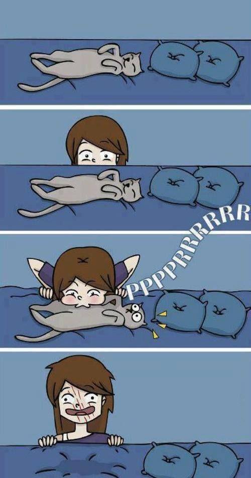 Cat people understand