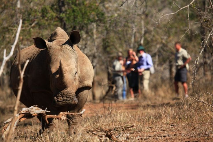 Conservation Tour in Zimbabwe, help the rhinos & elephants!