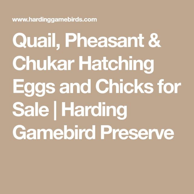 Quail, Pheasant & Chukar Hatching Eggs and Chicks for Sale | Harding Gamebird Preserve