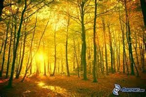 clairière de l'automne magnifique avec la clarté du soleil.