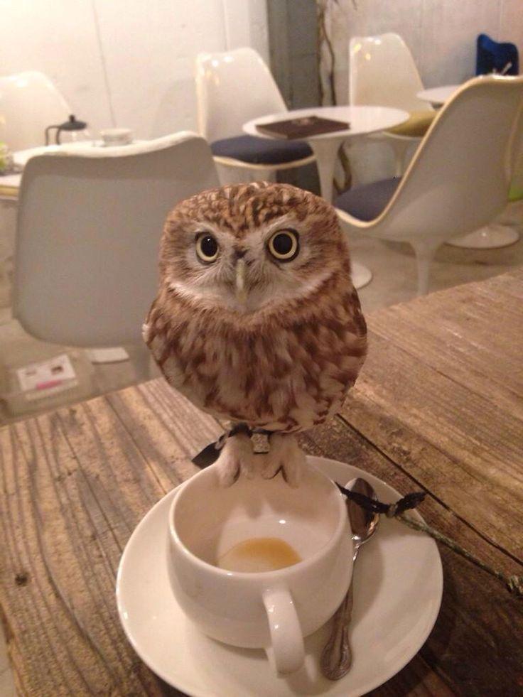 ふくろうカフェ。