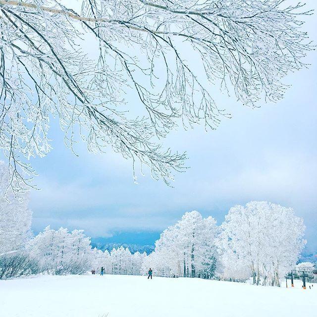WEBSTA @ nozzthehappyperson - Fist time this season. snow condition was nice! 今シーズン初!とても良いパウダー!#ski #snowboarding #mountain #snow #outdoor #nature #powdersnow #nagano#japan #sky #hill #piste #nozawa #スノボー #スキー #雪山 #アウトドア #パウダー #野沢温泉スキー場 #長野