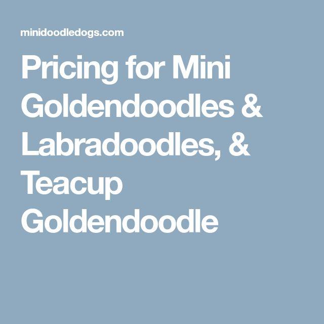 Pricing for Mini Goldendoodles & Labradoodles, & Teacup Goldendoodle