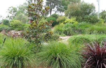 Designed by Australian, Arthur Lathouris (found on Houzz) - looks like Lomandra and Phormium, among other plants