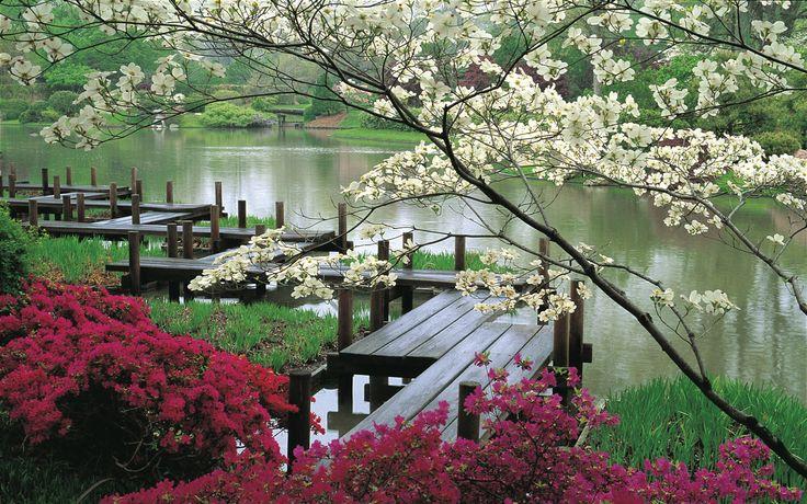 gorgeous walk by the river!St Louis, Beautiful, Lakes, Japanese Gardens, Places, Bridges, Japan Gardens, Flower, Botanical Gardens